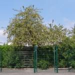 Groene uitloopren van 4x2 meter