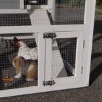 Deurtje voor ren konijnenhok