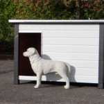 Zeer robuust en groot hondenhok Loebas, is o.a. geschikt voor een Boerboel