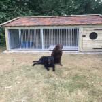 Hondenhok Rex 2 XL met ren
