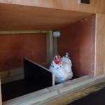 Kippenhok Professional Dubbel | legnest met 2 vakken