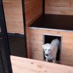 Ingebouwd nachthok in de hondenkennel