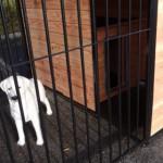 Geschikt voor middelgrote en grote hondenrassen