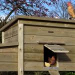Duurzaam en onderhoudsvrij kippenhok