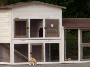 Plexiglas Isolatie Set voor konijnenhok Rosanne met Universal ren