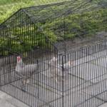 Kippenren - konijnenren Louis - zwarte draadkooi