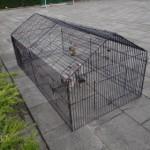 Kippenren - konijnenren Louis