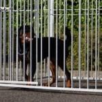 Hondenkennel FLINQ 2x1.5m