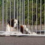 Hondenkennel FIX met half dak 3x2m