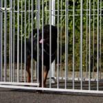 Hondenkennel FIX Voorzien van half dak 3x1.5m