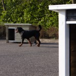 Buitenhok Ferro is een fijn nachthok voor uw hond