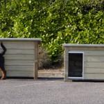 Hondenhokken met plat dak met Rottweiler