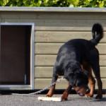 Hondenhok Wolf een praktisch houten hok voor bijv. een Rottweiler of een Husky