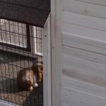 konijnenhok excellent medium met konijnenren rechts