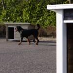 Hondenhokken met plat dak