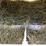 Nestkast van de Kathedraal als groot konijnenhok