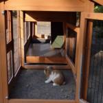 konijnenhok met uitloopren