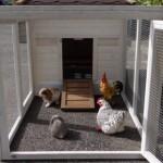 aanbouwren kippenhok
