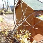 achterwand massief hout