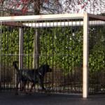 Hondenren met zwarte kennelpanelen en Douglas houtframe, oppervlakte 6 m2