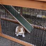 Deurtjes en loopplank konijnenhok Maurice