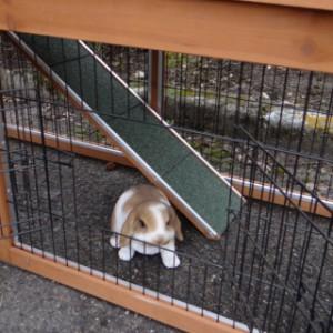 Onder ren konijnenhok Maurice