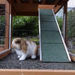 Loopplank naar nachthok van konijnenhok Maurice