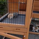 Schuiflades konijnenhok Maurice
