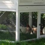 Groot konijnenhok met ruime konijnenren