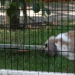 Goedkoop konijnenhok Pretty Home, maar wel met konijnenren!