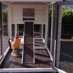 Loopplank en ren kippenhok