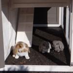 Onderren konijnenhok Annemieke