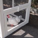 Opening voor ren in konijnenhok Budget