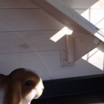 Loopplank konijnenhok