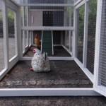 kippenhok met uitloopren