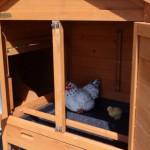 Kippen nachthok met zitstok