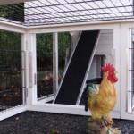 Opening in aanbouwren kippenhok