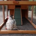 Konijnenhok Budget met kunststof dak: kijkje in de buitenren met loopplank