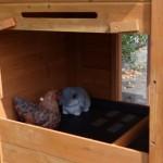 Konijnenhok Budget met kunststof dak
