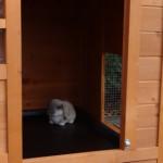 Nachthok konijnenhok Julia