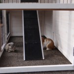 Onderren konijnenhok Holiday