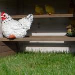 Kippenzitstokken op houders