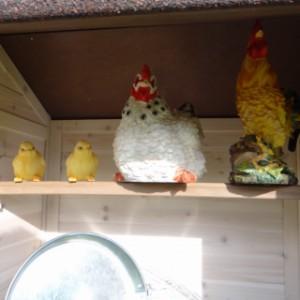 Schuilplek voor kippen