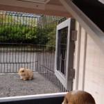 Konijnenhok Excellent Small met ren Joey
