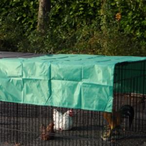 Zonnescherm voor kippenren