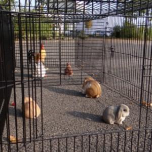 Ren voor konijnen