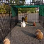 Dierenren Jeffrey: konijnenren of konijnenren met zonnescherm