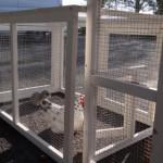 aanbouwren kippenhok leah