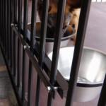 Voerbak Drinkbak voor hondenkennel