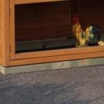Geïmpregneerd houten fundering voor dierenhok Prestige Small met ren